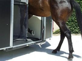 Les vans Saint Georges sont équipés d'un plancher progressif qui permet au cheval de se sentir en toute sécurité.
