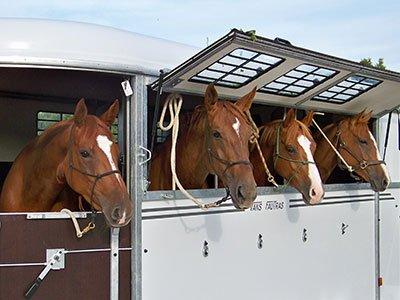 Auvent latéral donnant accès à la tête des chevaux (en option).